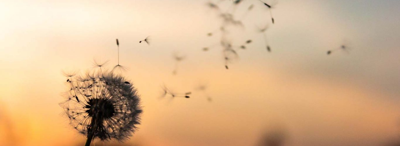 Mindfulness para tu vida laboral